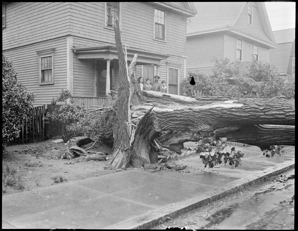 Fallen tree in front of house, storm(?)