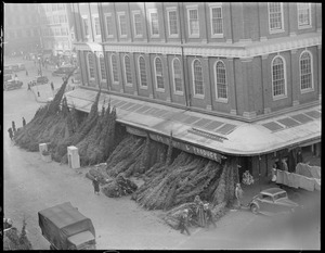 Allen and Co. Fruit and Produce selling Christmas trees, Faneuil Hall