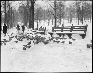 Winter scene on Boston Common - showing pigeons