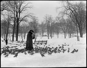 Lady feeding pigeons on Boston Common, in winter