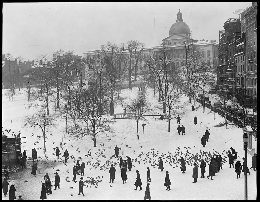 State House - looking up Park St. from Tremont St. feeding pigeons in foreground (bird's eye)