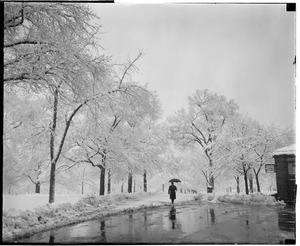 Boston Common after snowstorm