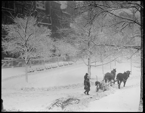 Team of horses plows path on Boston Common