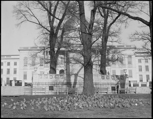 Pigeons in front of State House