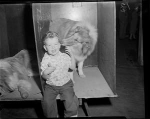 Boy visits dogs in kennel