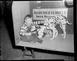 Boy with two Dalmatians from the Roadcoach Kennels in Dover, at the dog show