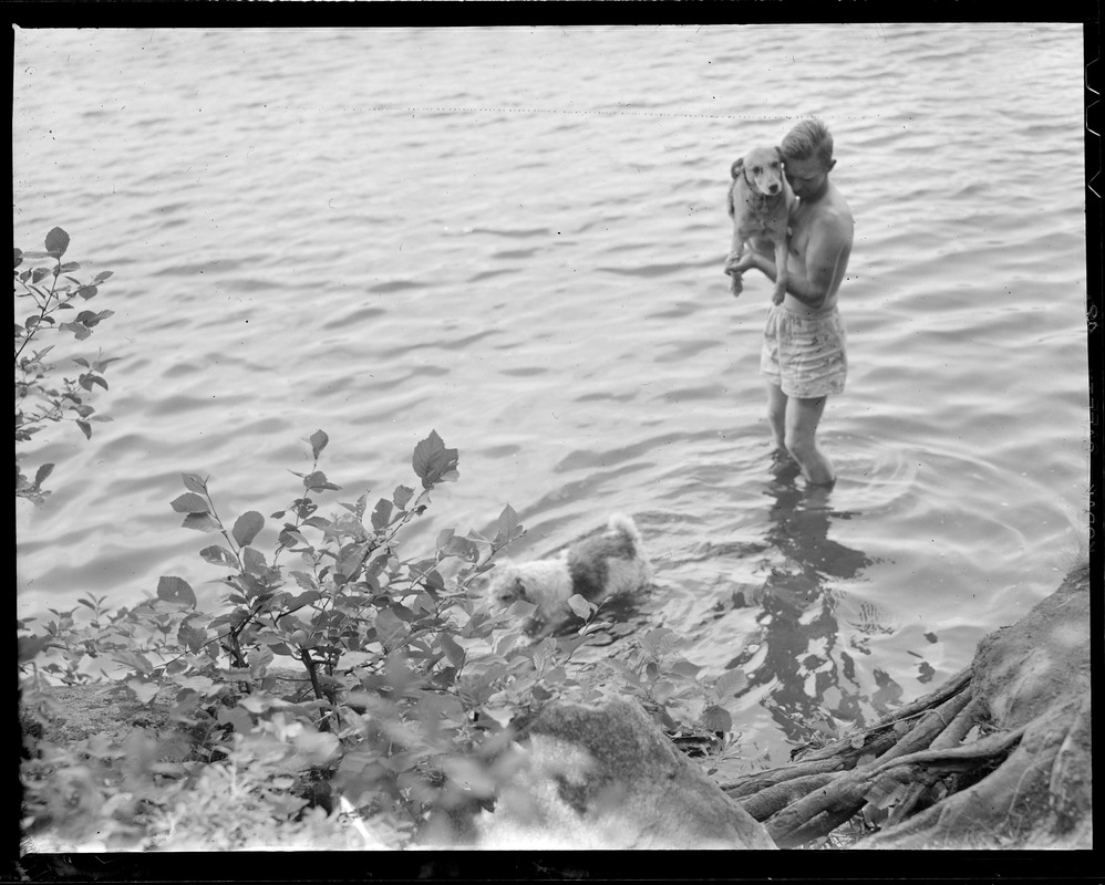 Boy and dogs in water
