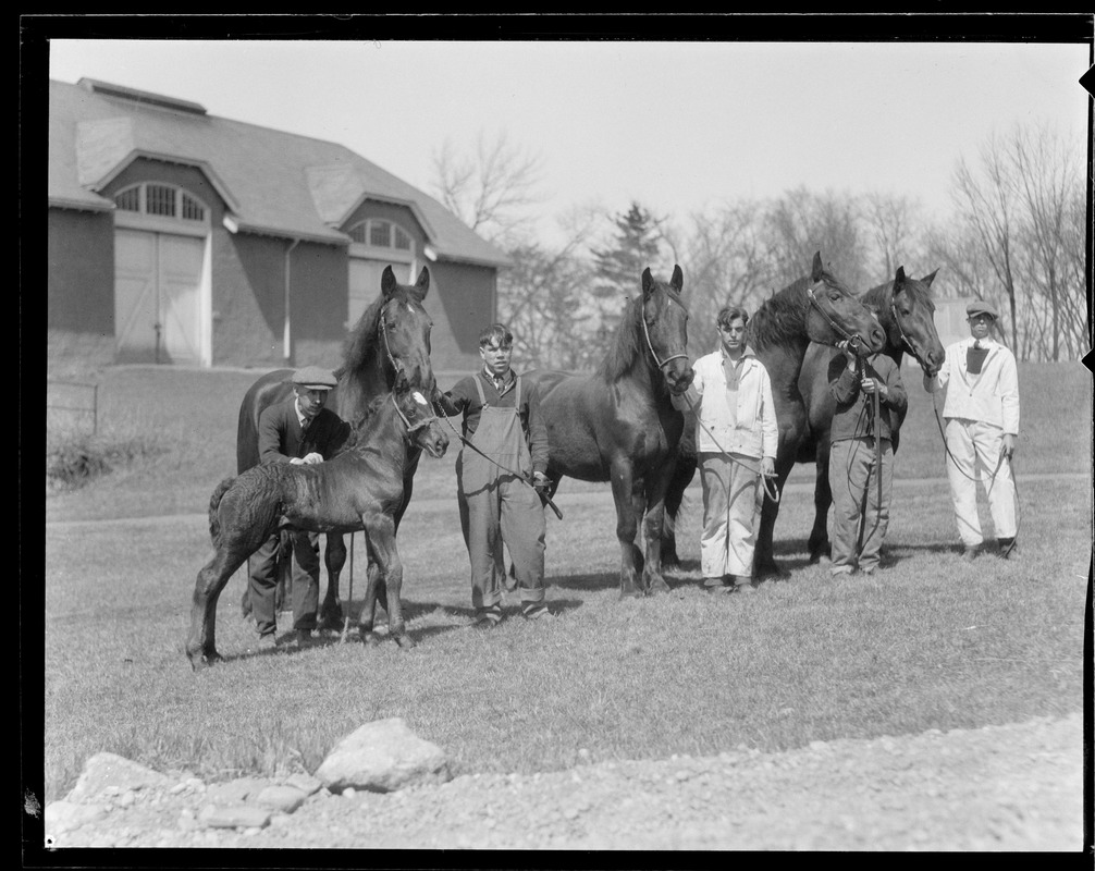 Boys with horses at Mass. Agricultural College in Amherst