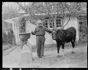 Anthony Thieme and a cow