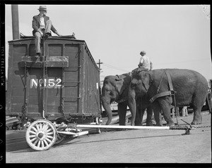 Circus arrives at RR Yards in Charlestown, elephants disembark