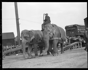 Elephants arriving at railroad yards in Charlestown for circus