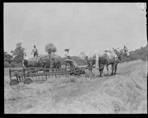 Pitching hay with hay wagon