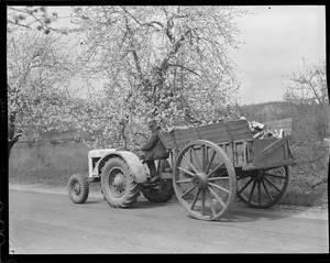 Farmer carting firewood with tractor