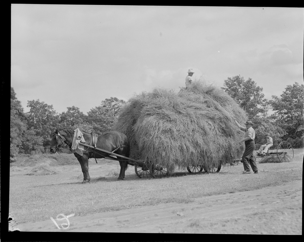 Farmer driving full hay cart