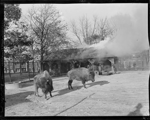 Buffalo house fire at Franklin Park Zoo