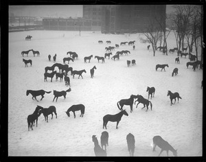 Horses at Commonwealth Armory in snow