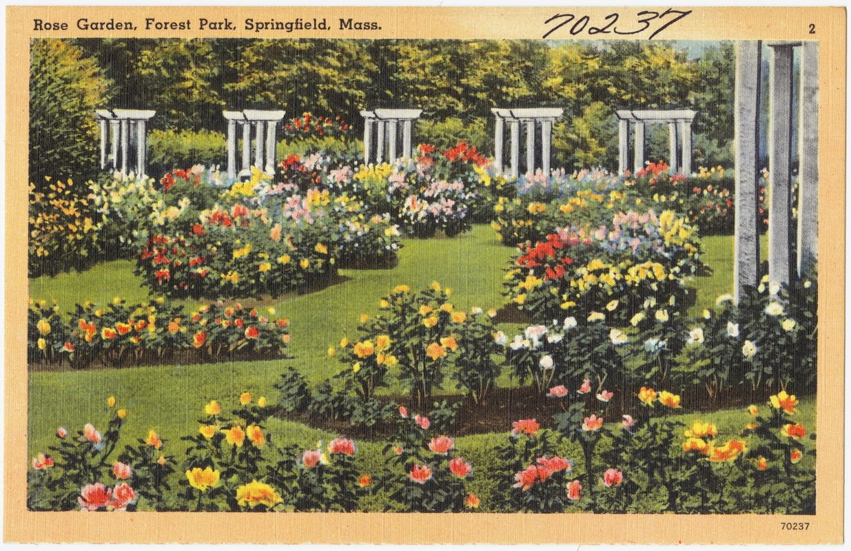 Image result for rose gardens
