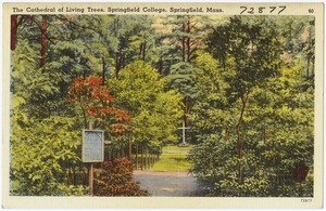 The Cathedral of Living Trees, Springfield College, Springfield, Mass.