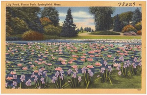 Lily pond, Forest Park, Springfield, Mass.