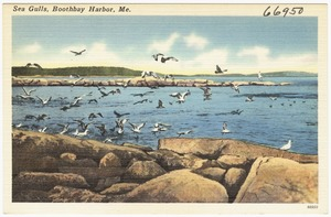Sea Gulls, Boothbay Harbor, Me.