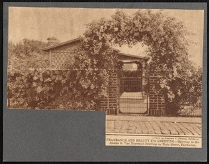 Climbing roses over entrance gate to Alonzo G. Van Nostrand house