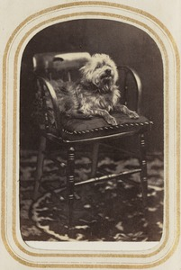 Portrait of a dog on a chair [J.H.S]