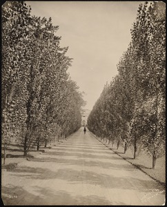 Bellefontaine: driveway with horseman, lined with trees