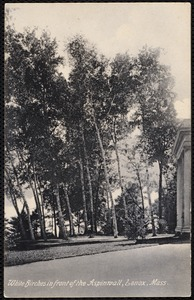 Aspinwall Hotel: white birches in front