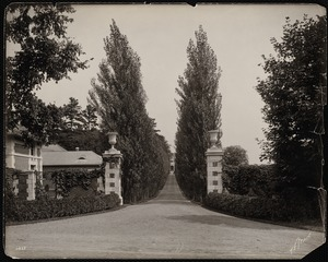 Bellefontaine: driveway with pine trees.