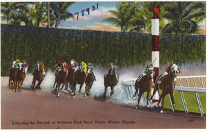 Entering the stretch at Hialeah Park race track, Miami, Florida