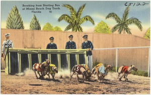 Breaking from the starting box at Miami Beach dog track, Florida