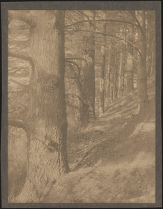 Trees on hillside at Baldwin's Pond