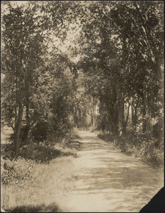 A tree-lined country road in summer
