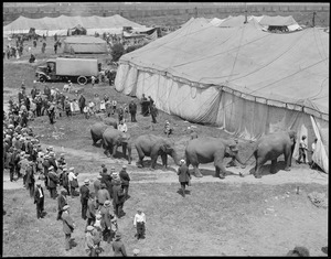 Circus days - elephants shine.