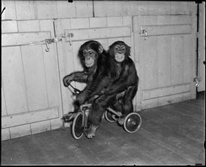 Benson Farm animals N.H. (2 monkeys on tricycle)