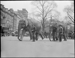 Elephants parade in Boston