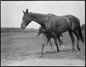 Horse & young