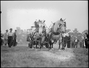 Two horses pulling a vehicle