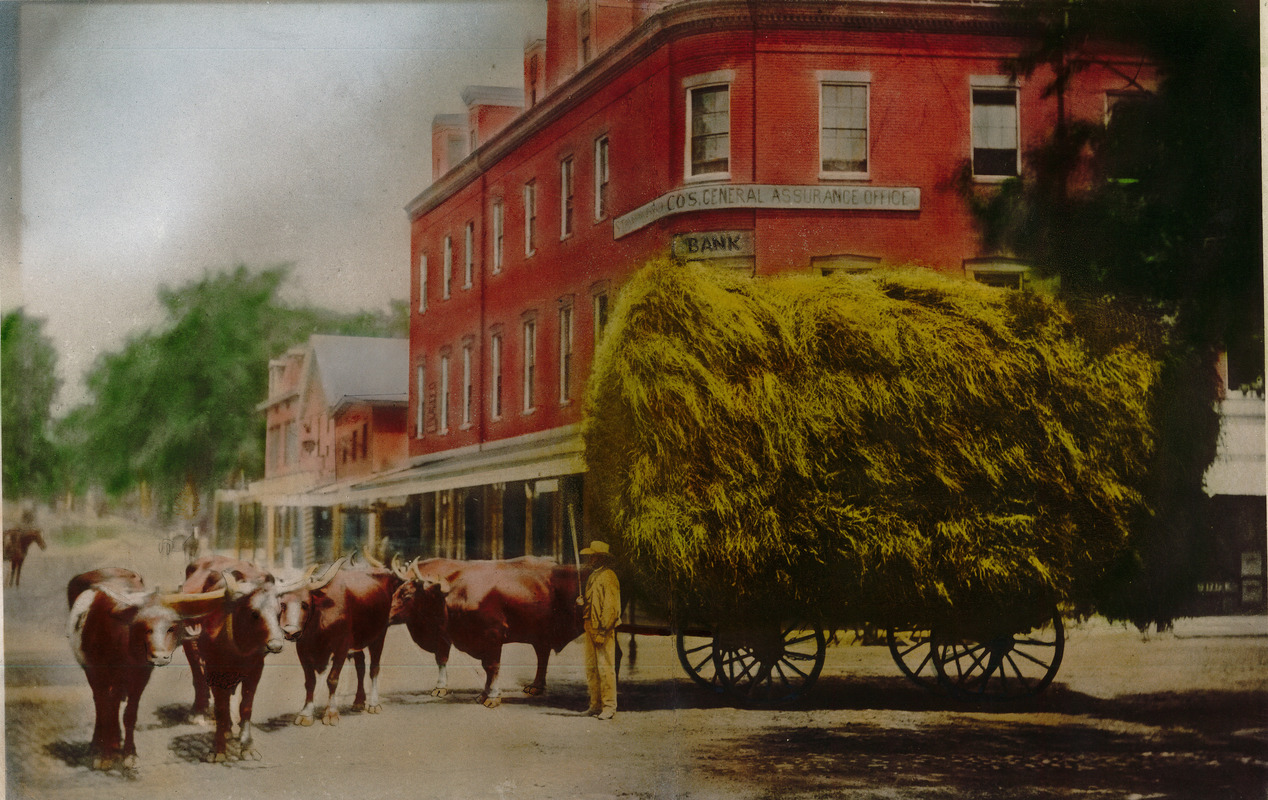 John J. Murphy driving a hay wagon through Lawrence, Mass.