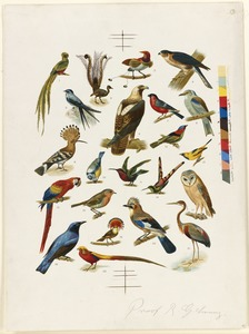 22 Species of Birds