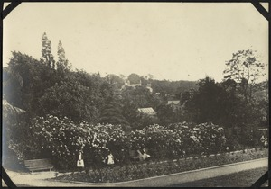Rhododendrons in Girls' Gardens, The Royal Normal College for the Blind, England