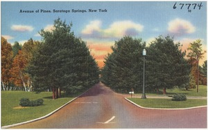 Avenue of Pines, Saratoga Springs, New York