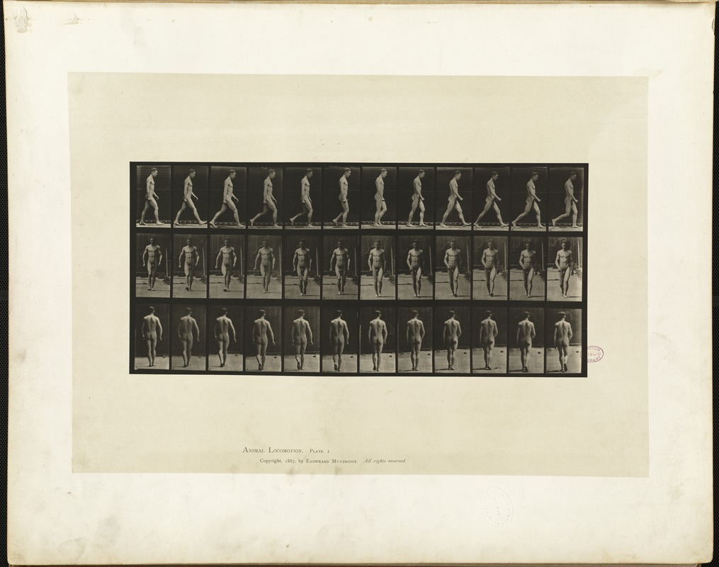 Animal locomotion. Plate 1