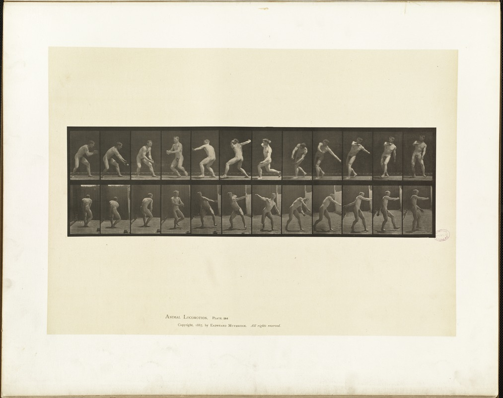 Animal locomotion. Plate 284