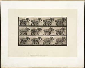 Animal locomotion. Plate 563