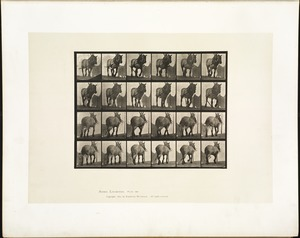 Animal locomotion. Plate 564