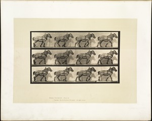 Animal locomotion. Plate 565