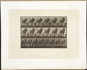Animal locomotion. Plate 566