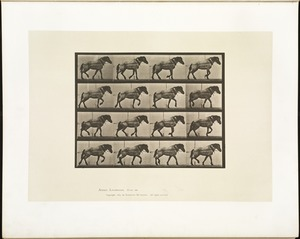 Animal locomotion. Plate 569