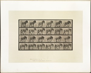 Animal locomotion. Plate 570